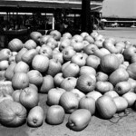 Pumpkins at the Beaver Street Market - Jacksonville thumbnail