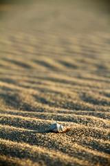 Macro dune (alestaleiro) Tags: mar playa texturas sand arena sabbia conchae concha caracolas marinas mare sea ocean dune desert jericoacoara ceará duna macro detalle detail alestaleiro