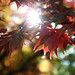 """Westonbirt Arboretum • <a style=""""font-size:0.8em;"""" href=""""http://www.flickr.com/photos/84132664@N06/26389849849/"""" target=""""_blank"""">View on Flickr</a>"""