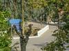 Ψίνθος (Psinthos.Net) Tags: ψίνθοσ psinthos autumn november νοέμβριοσ νοέμβρησ φθινόπωρο φύση nature trees δέντρα βρύση βρύσηψίνθου βρύσηψίνθοσ περιοχήβρύση vrisi vrisiarea vrisipsinthos noon μεσημέρι μεσημέριφθινοπώρου φθινοπωρινόμεσημέρι μέρα day road δρόμοσ γεφύρι bridge signs πινακίδεσ ακακία δέντρο tree acacia treetrunk κορμόσδέντρου sidewalk πεζοδρόμιο πλακόστρωτο pavement εκκλησάκι κεραμίδια tiles chapel planetree leaves φύλλα πλάτανοσ φύλλαφθινοπώρου φθινοπωρινάφύλλα autumnleaves κοιλάδα κοιλάδαψίνθου κοιλάδαψίνθοσ valley psinthosvalley ευκάλυπτοι eucalypts eucalypt ευκάλυπτοσ treebranches κλαδιάδέντρων χόρτα greens