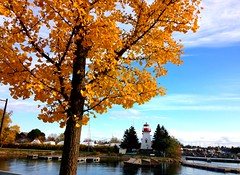"""The opposite of More is Enough.""  -William Paul Young  -  Explored (Trinimusic2008 - stay blessed) Tags: trinimusic2008 judymeikle nature today november 2017 fall neighbourhood walk toronto to ontario canada lake lakeontario lighthouse mimico humberbaypromenade sky water autumn sailboats g ginkgotree"