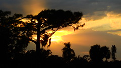 Sunset September 19th (Jim Mullhaupt) Tags: sunset sundown dusk sun evening endofday sky clouds color red gold orange pink yellow blue tree palm outdoor silhouette weather tropical exotic wallpaper landscape nikon coolpix p900 bradenton florida manateecounty jimmullhaupt cloudsstormssunsetssunrises photo flickr geographic picture pictures camera snapshot photography nikoncoolpixp900 nikonp900 coolpixp900