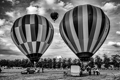 black and white balloons (michaeljoakes) Tags: xf1855mmf284rlmois kitlens fujifilmxt1 fuji hotairballoon balloon york knavesmire 2017 blackandwhite mono fridayfeeling 3 outdoor september glimp yorkballoonfiesta