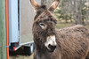 Volunteer Day at FARRM Sanctuary (Vegan Butterfly) Tags: animal rights vegan veganism sanctuary farrm farm rescue rehoming movement cute adorable outside outdoor justice caring kindness nonviolence against speciesism donkey