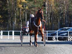 20171005002967 (koppomcolors) Tags: koppomcolors quick fix heart svensk travsport premie lopp koppom värmland sweden sverige