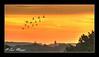 Dawn Flight Impressions (ScreamingSkulls) Tags: landscape fujifilmfinepixhs30exr dawn geese sunlight red birds flight sthelens screamingskulls ericmercer sthelenscameraclub carrmill