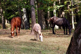 Horses That Eat Together