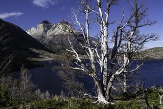 Cuernos del Paine & Lago Skottsberg in light of the evening