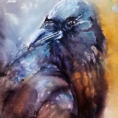 Fierce. Inktober day 14. (sushipulla) Tags: birds birdsart crow animalart animal nature wildlife wild inktober2017 inktober ink inked inkwash