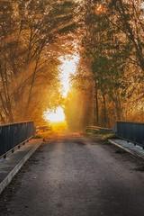 gold Morning (drummerwinger) Tags: rot herbst laub canon700d 50mmstm gaden dunst nebel blätter stimmung erding