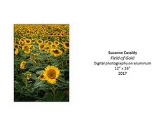 """Field of Gold • <a style=""""font-size:0.8em;"""" href=""""https://www.flickr.com/photos/124378531@N04/37106285043/"""" target=""""_blank"""">View on Flickr</a>"""