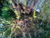 Coccinellidae (Vadim Beldiy) Tags: insecta coccinellidae coleoptera holometabola cameraphone phone nokialumia925 nokialumia carlzeisspureview carlzeiss nature macro autumn light ladybugs windowsphone nokia nationalgeographic