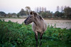 _DSC3820.jpg (kchan0214) Tags: konikpaarden tokinaatxmacro90f25 lenstagger bokina tokina 90mm animal nijmegen gelderland netherlands nl