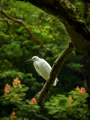 Today I'm a Vegetarian (Jimweaver) Tags: lake sky bird animal water stream river taiwan taipei plumbeousredstart green sunny 汐止 翠湖 金龍湖 單色 鳥 覓食 飛 翅膀 動物 鷺鷥 cloudy evening 水 egret fly park 白鷺鷥 台灣 台北 生態 白鷺 天空 asia 亞洲