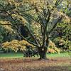 Westernbirt Autumn (cben) Tags: trees gloucestershire westonbirt arboretum autumn