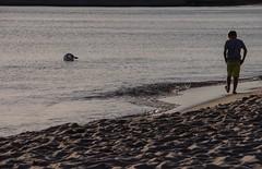 Self-Absorbed (Marilely) Tags: selfabsorbed hel polen vertieft sich selbst ostsee strand schwan junge boy swan sand beach sundown poland