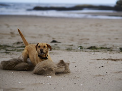 Photo of Dog on the beach