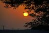 Magic Tree of Life at sunset, Bahrain (Andrey Sulitskiy) Tags: bahrain
