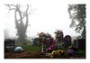 Fog Flowers (TooLoose-LeTrek) Tags: cemetery fog mist haze tree floweres headstone death
