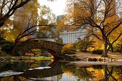 Foliage d'autunno, le città più belle dove ammirare i colori della stagione (Cudriec) Tags: america amsterdam autunno bruges canada città dresda edimburgo europa foliagedautunno germania italia montreal natura newyork roma stoccolma unesco vacanza viaggi viaggiare