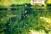 _U7A6510 (rpealit) Tags: scenery wildlife nature east hatchery alumni field hackettstown