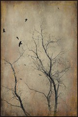 Whispers of Old Trees (Christina's World aka Chrissie Bee) Tags: birds textures artistic brown art autumn trees woods baretree flight birdsflying blackbird sandiego scenic sky tree branches mysterious natureabstract minimalistic monochrome digitalart dramatic dark usa unitedstates california creative painterly november