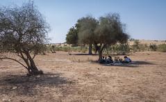 Rajasthan - Jaisalmer - Desert Safari with Camels-31