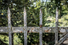 Anytime you see a turtle up on top of a fence post, you know he had some help (Peter Jaspers) Tags: frompeterj© 2017 olympus omd em10 1240mm28 fence fenced hff happyfencefriday domme dordogne aquitaine clôture dof bokeh rust decay