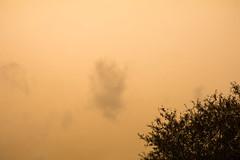 Orange Skies - UK - 2PM 16 Oct (aronalison) Tags: ophelia ukstorm orangeskyuk orange sky storm hurricane beautiful color colour colours uk