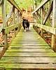 45/52 Weeks for Maddy (ginam6p) Tags: 52weeksfordogs2017 dog bridge maddy australianshepherd ontario hiking fetch nikond5000