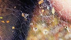 Autumn Abstraction (Alfred Grupstra) Tags: closeup backgrounds macro nature abstract pattern nopeople spiderweb drops
