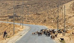 Streets of Jordan (jennifer.stahn) Tags: travel travelphotography jordan jordanien petra street streetphotography ziegen goats nikon jennifer stahn tradition traditional wüste desert standstone