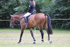 _MG_5834 (dreiwn) Tags: ridingarena reitturnier reiten reitplatz reitverein reitsport ridingclub equestrian showjumping springreiten horse horseback horseriding horseshow pferdesport pferd pony pferde tamronsp70200f28divcusd