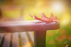 Leafy Bench.. (KissThePixel) Tags: happybenchmonday bench benches benchmonday parkbench woodenbench gardenbench benchbokeh bokeh gold goldbokeh goldenbokeh leaf leaves redleaf bokelicious nikon nikondf 50mm ai ailens 12 nikkor nikkor12 autumn autumncolours autumnlight autumnwalk beautiful beautifulday seat october peace