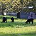 Black sheeps :-)