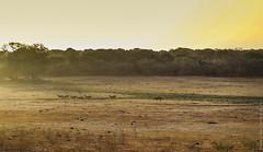 25.06-Yala-National-Park-Sri-Lanka-canon-1500px-011
