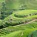rice terrace - 4
