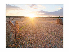 Harvest8 (johnheritage712) Tags: summer autumn harvest field sunrise sunset straw bales mist rural countryside nature