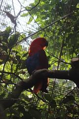 Papagei / Taronga Zoo