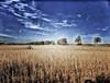 Autumn at the Soybean Field (kendoman26) Tags: hdr nikhdrefexpro2 nikcoloreffex4pro niksoftware happyslidersunday hss soybeanfield sky fuji fujifinepix fujifinepixf750exr