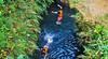 Jump Green Santirah (Go Explore Indonesia) Tags: greensantirah sungaisantirah santirahpangandaran pangandaran rivertubing adventure rafting arungjeram desawisataselasari parigi