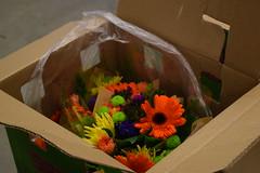 DSC_0061 (rmtnfern) Tags: camp four echos wiebe grant wedding