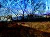 Ardinning_Autumn_sub_0006 (troutcolor) Tags: imagemagick subtract autumn ardinning