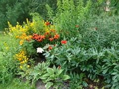 00002 (Toivo Miettinen) Tags: kukkapenkki kukat kotipiha kukka kesä kasvi