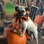 Boo Lefou Posing On A Pumpkin For You! thumbnail