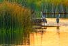 Anticipation of a New Day (James Neeley) Tags: idaho marketlake sandhillcrane wildlife jamesneeley