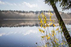 IMG_1498 (Markus Heinonen Photography) Tags: peltolammi järvi lake tyyni usva dimma mist reflection waterscape tampere suomi finland luonto nature
