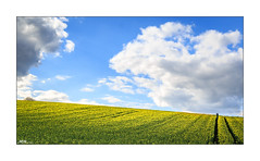 Photographer and the tree (mmsig) Tags: 2017 ausflug raps germany deutschland lowersaxony sky blue himmel himmelsblau sun summer summerfeeling sommer april baum gras grün gelb yellow field feld tree cloud fotograf