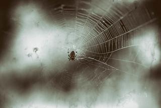Day 6: Arachnophobia