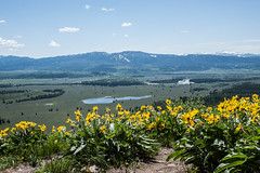View from the Signal Mountain (atsubor) Tags: usa wyoming grandteton nationalpark park panoramicview flowers mountains lake